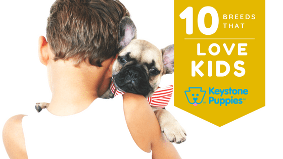 kids-breeds-french-bulldog-puppies-for-sale-Pennsylvania